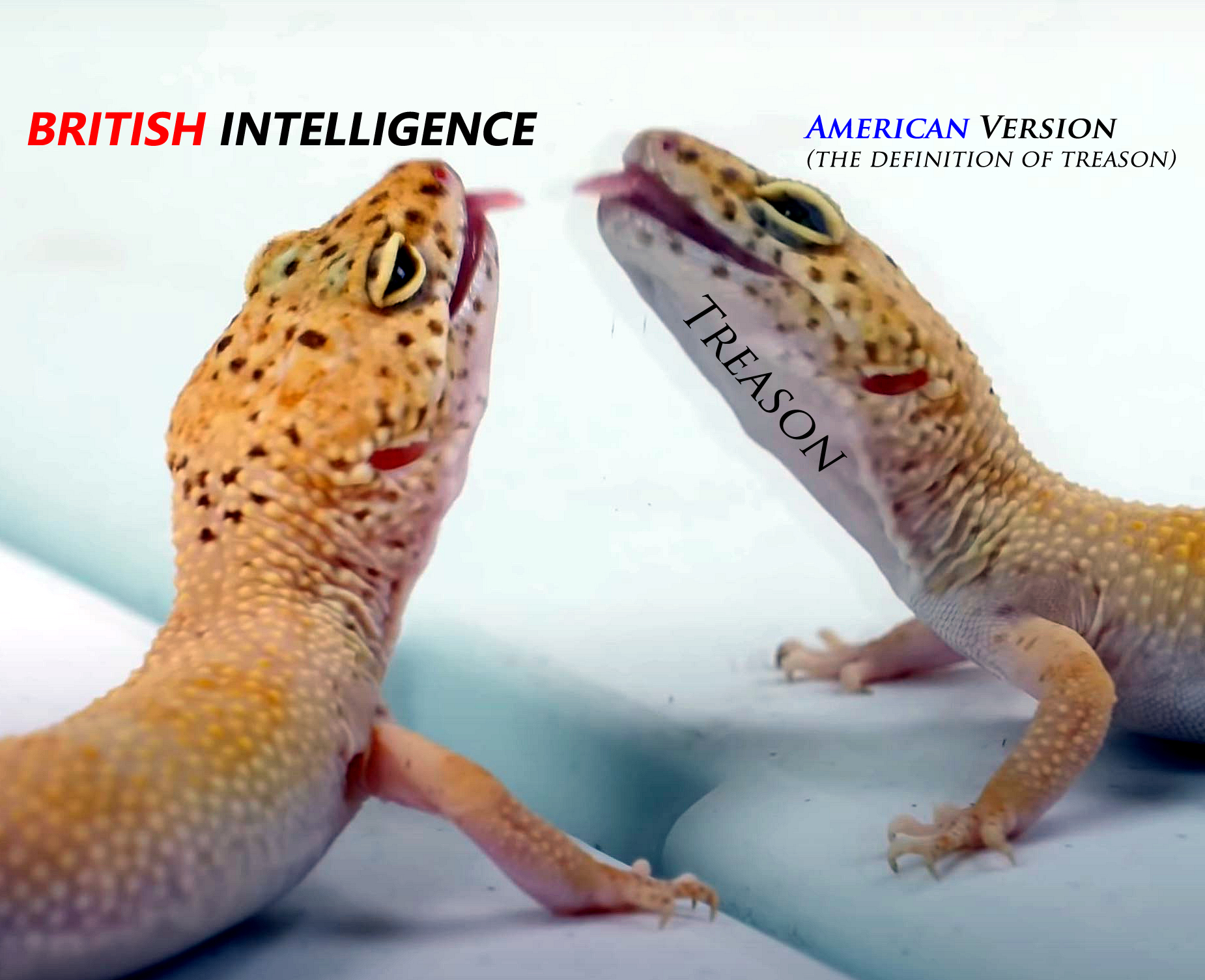 American intelligence is merely a clone of British intelligence